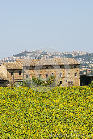 Old farmhouse and panorama of Osimo