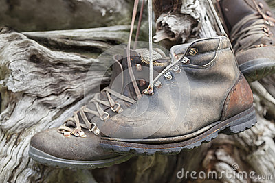 Old-fashioned hiking shoes hanging on trunk.