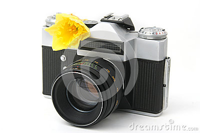 Old film camera on white with yellow narcissus