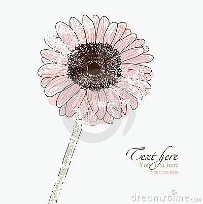 Old Gerbera Daisy flower