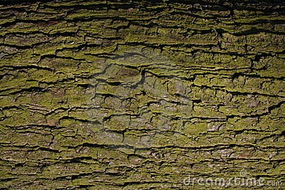 Old green tree texture