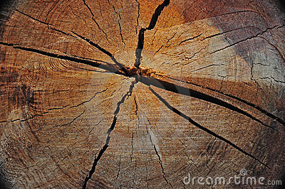 Old growth log