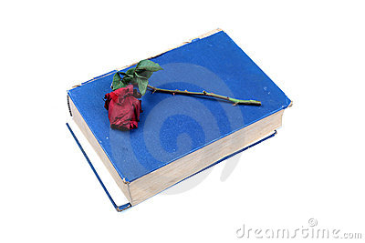 Old holy book with rose
