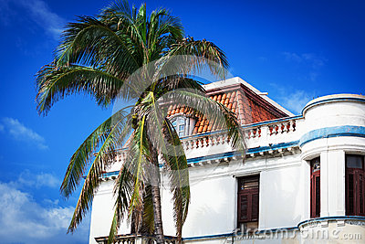 Old house and palm
