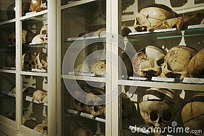 Old human skulls