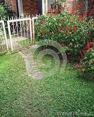 Old iron gate in garden