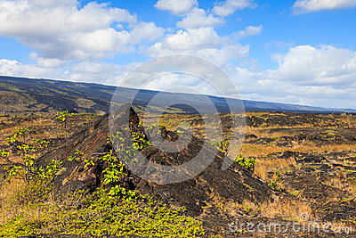Old Lava Field in Hawaii
