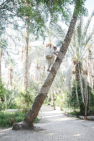 Old man climbing on palm tree in Tozeur oasis Editorial Photography
