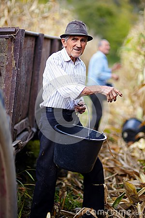 Old man at corn harvest holding a bucket