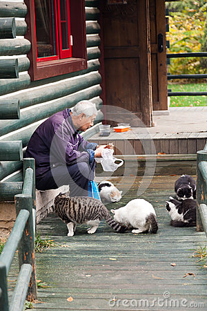 Free Old Man Feeding The Stray Cats In The Park Stock Photo - 24725680