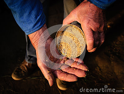 Old man hands farmer feed