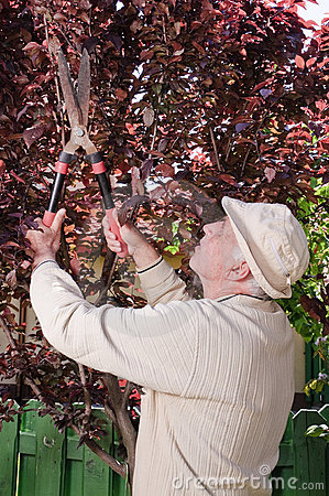 Old man with hedge clippers