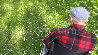 Old man in wheelchair. Old man sitting in wheelchair enjoying spring in the park. White apple tree blossom petals falling on a green grass. Shot from behind and