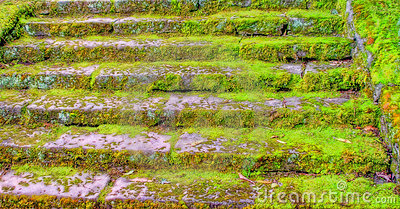Old Mossy Stairs