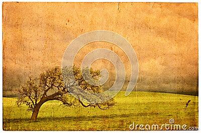 Old Oak Postcard