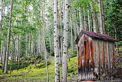 Old Outhouse in Aspen Forest
