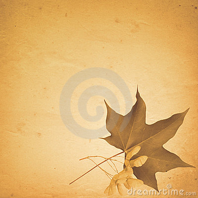 Old paper background with maple leaf and seeds