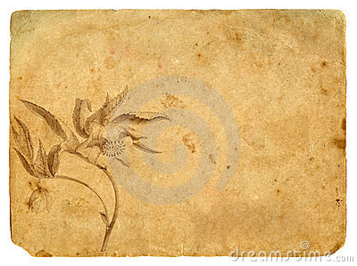 Old paper with a flower in a graphic style