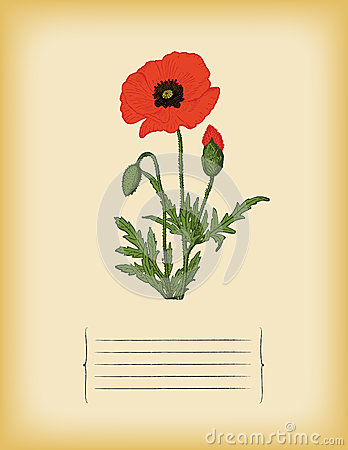 Old paper template with Red Poppy flower. Vector