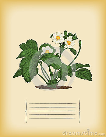 Old paper template with Strawberry bush. Vector