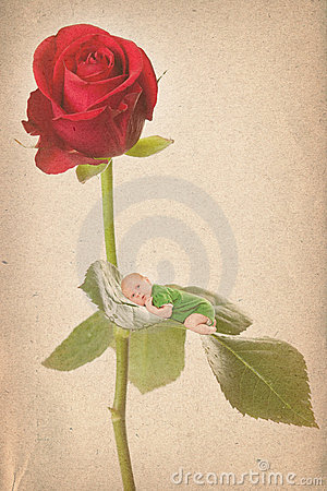 Old paper textures with baby and roses