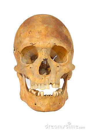 Old prehistoric human skull isolated