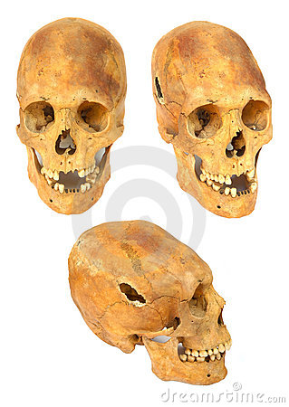 Free Old Prehistoric Human Skull Isolated Royalty Free Stock Images - 7857469