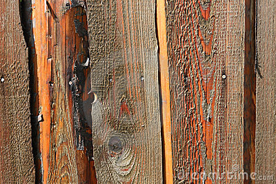 Old rough wood texture