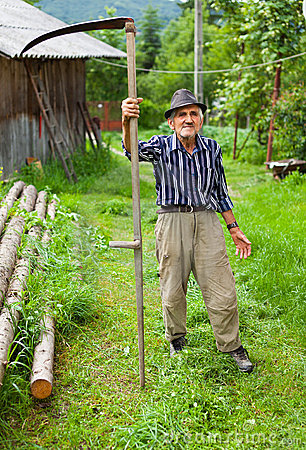 Old rural man using scythe