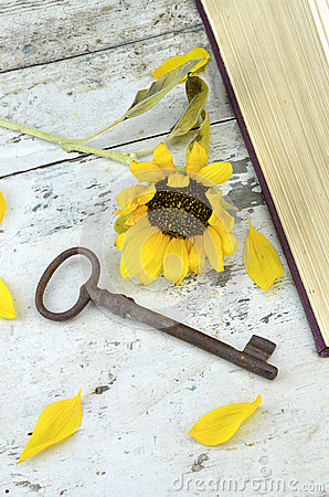 Old rusty key and sunflower