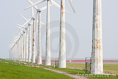 Old rusty windturbines with sheep and tulips