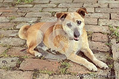 Old sad mix breed dog vintage film look