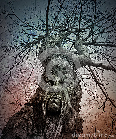 Free Old Scary Tree With Angry Face In Woods Royalty Free Stock Photo - 44821355