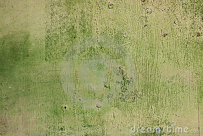 Old scratched green wood texture