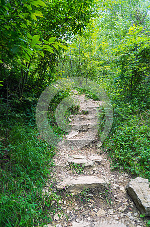 Free Old Stairs In Forest Royalty Free Stock Photography - 75682427
