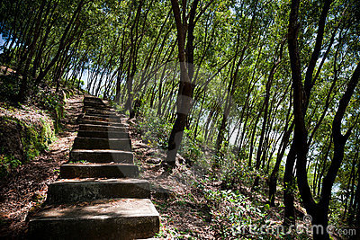 Old steps in forest