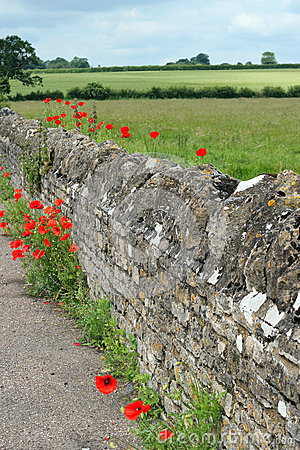Old stone wall with poppies