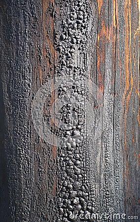 Old telegraph post column texture close-up