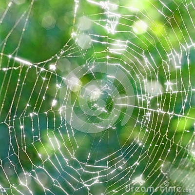 Old torn spiderweb shines in the sun