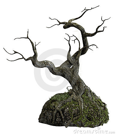 Free Old Tree 2 Stock Images - 14972874