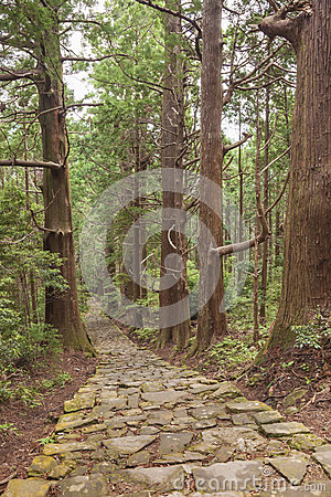 Tree Forest and Stone Trail in Kumano Pilgrimage Route. Kansai, Japan, Asia. Unesco Site