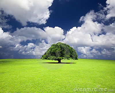 Old tree on the grass