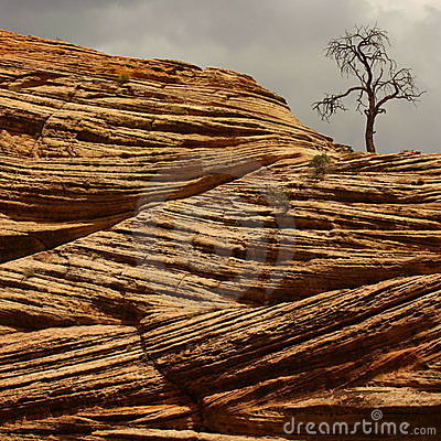 Free Old Tree On Red Sandstone Stock Photography - 9323102