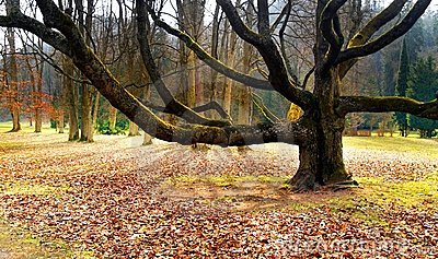 Old tree in the park