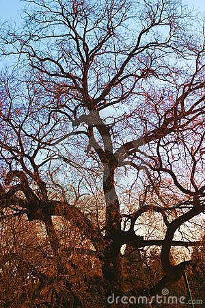 old tree shade