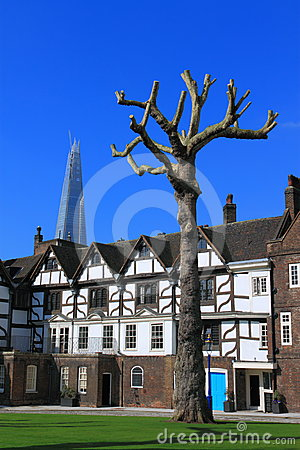 Old Tree in Tower of London