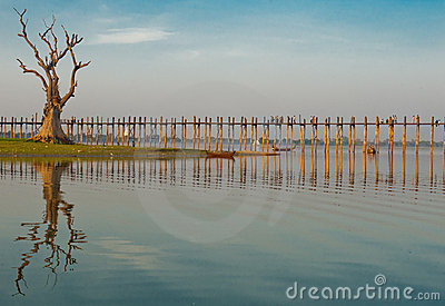 Old tree by ubein bridge Editorial Image
