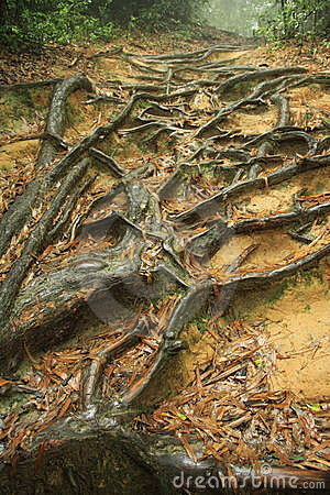 Old Tree with Winding Roots