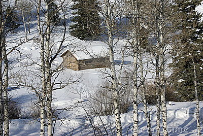 Old western cabin in snow with aspens