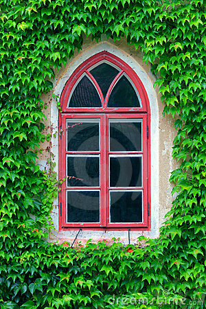 Old window and ivy